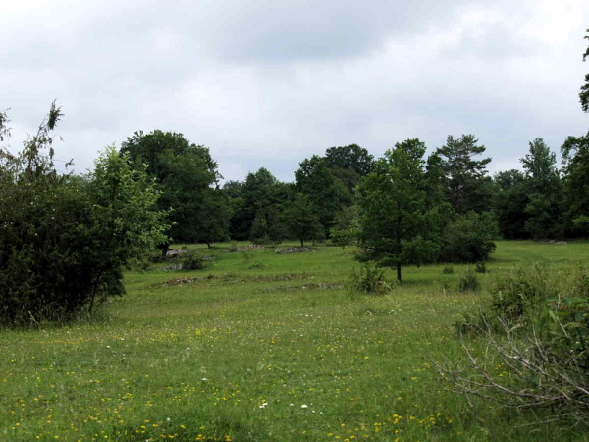 Heidelandschaft - Großes Lautertal